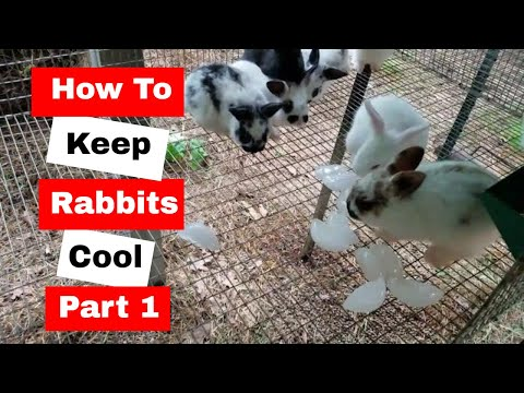How to Keep Rabbits Cool During the Hot Summer Months
