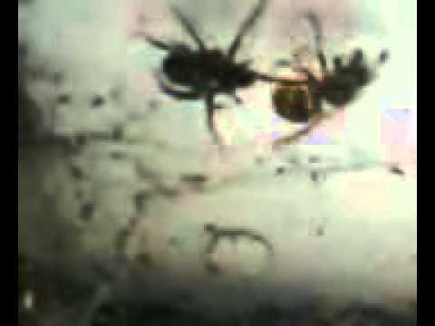 Spider vs Wasp PART 2