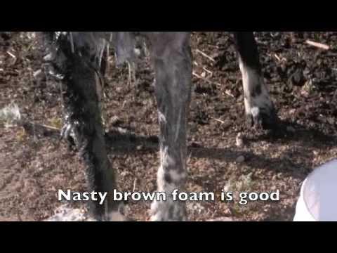 Skunk stink removal