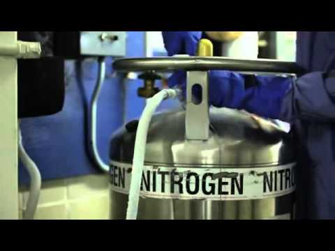 Cryopreservation - Filling and Maintenance of Liquid Nitrogen Tanks
