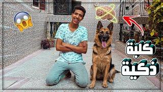 تحديات لإختبار ذكاء كلبتي🐶!!! أذكى كلبة في العالم😂😂