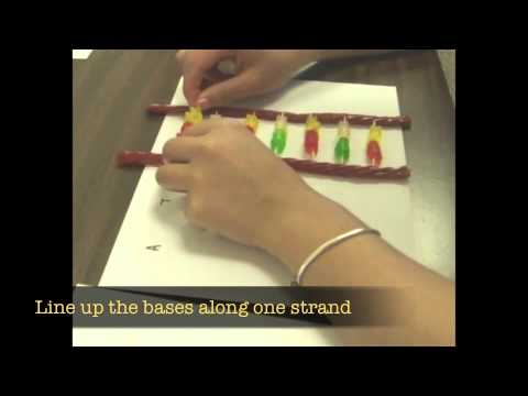 Gummy Bear DNA Activity