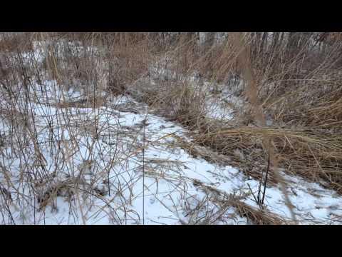 Public land shed find