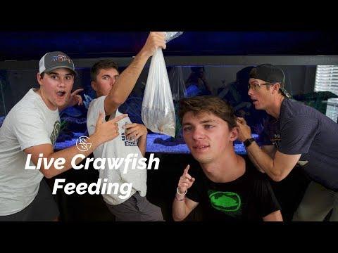 FEEDING PET BASS LIVE CRAWFISH!!!