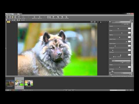 Nikon View NX2 software basics tutorial