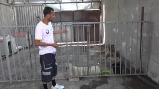 თამაზ ელიზბარაშვილის ძაღლების თავშესაფრის პრობლემები