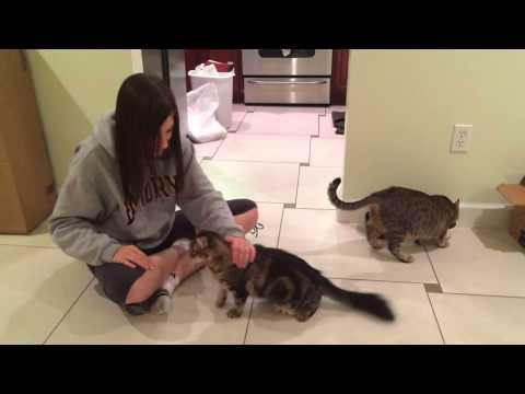 Major petting session!!