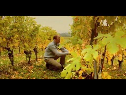 YouTube - Wines from  switzerland