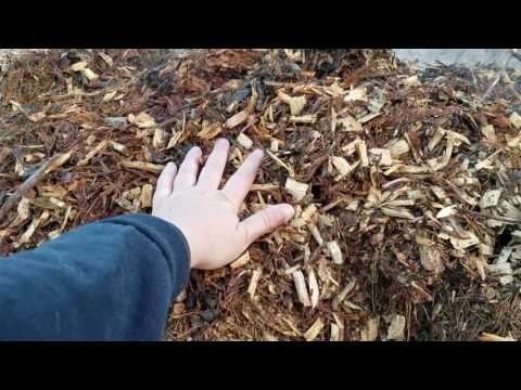 Wood Chip Decomposition