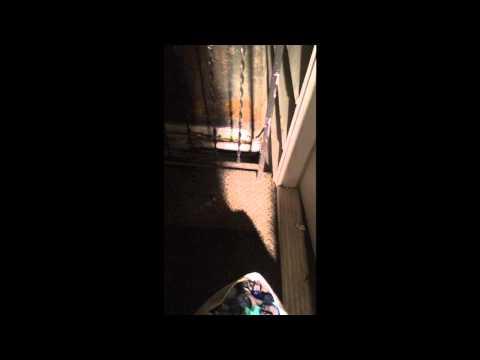 Possum won't leave my front porch