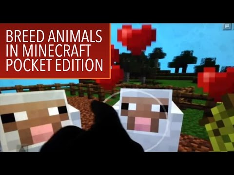 Minecraft PE How-to: Breeding Animals in Creative Mode - MPE1