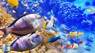 3 HOURS of Beautiful Coral Reef Fish, Relaxing Ocean Fish & The Best Relax Music 1080p HD