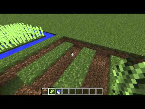 how to make suger canes grow fast