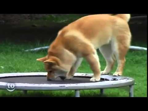 How to Stop Puppy from Jumping on People - dog obedience training