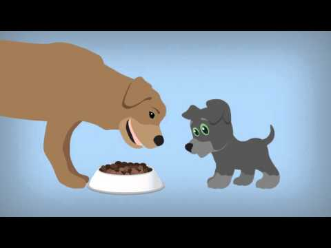 Food for Thought - What A Puppy Eats