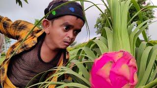 CHOTU KE DRAGON PHAL | छोटू के ड्रैगन फल | Khandesh Hindi Comedy | Chotu Dada comedy Video