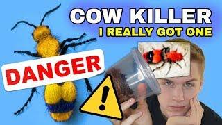 Download I GOT A PET COW KILLER! (Yes, I'm Crazy) Video