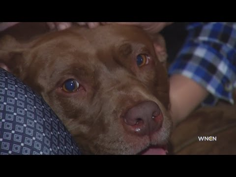 Game gathering benefits group helping veterans get paired with dogs