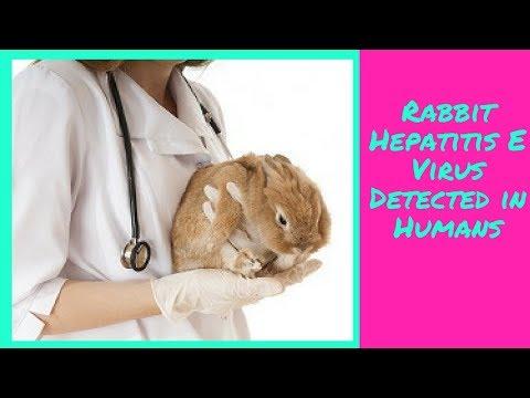 Rabbit Hepatitis E Virus Detected in Humans