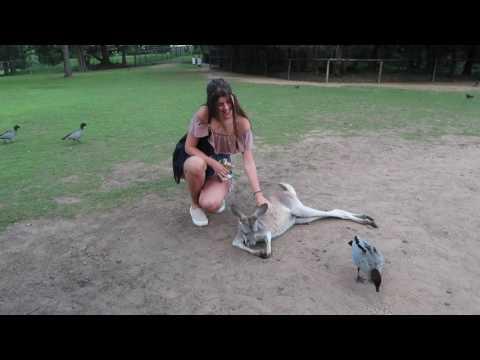 Brisbane - Travel video