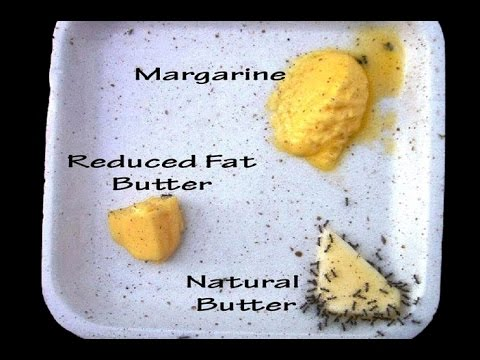 If Margarine Is Healthier Why Won't Ants Eat It