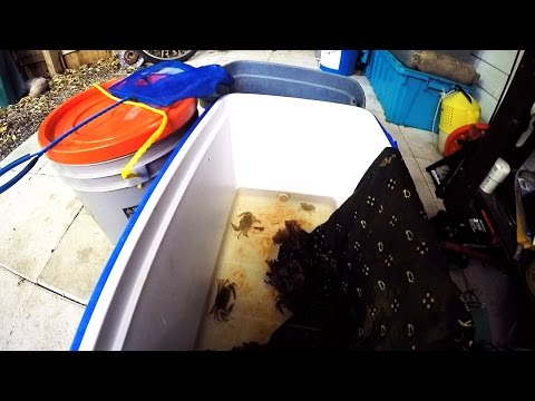 Blue Crab Live Well - Holding Tank
