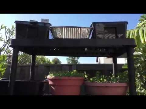 How To Grow Vertically - Vertical Gardening Made Easy - Small Space Vegetable Garden