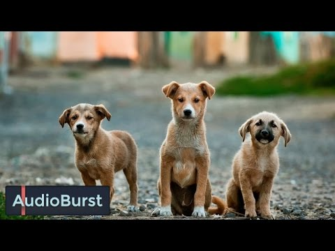 Is It Safe To Take Your Unvaccinated Puppy Outdoors?