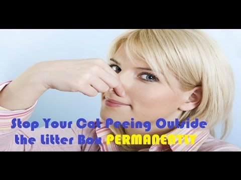 How to Get Rid of Cat Pee Smell ► Stop Your Cat Peeing Outside the Litter Box PERMANENTLY