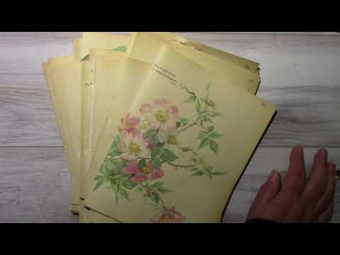 Remove Musty Smell from Paper