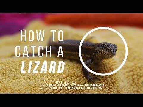 How to Catch a LIZARD