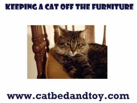 Keeping A Cat Off The Furniture