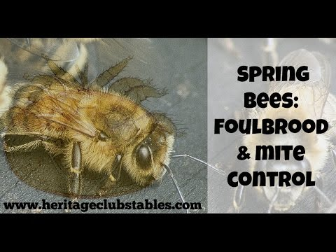Spring Bee: