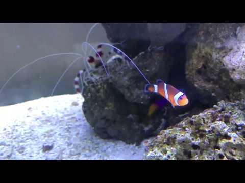 Releasing my new clown fish