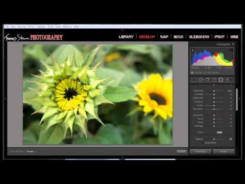How To Create A Selective Vignette In Lightroom And Photoshop