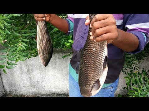 5 KG Big Fish Recipe cooking by devi's kitchen/Big Fish Curry