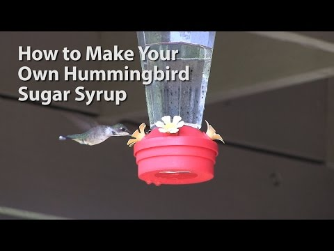 How to Make Your Own Hummingbird Sugar Water Syrup