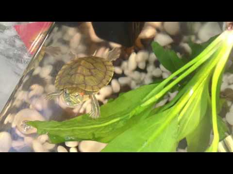 turtle's growth in 5 months