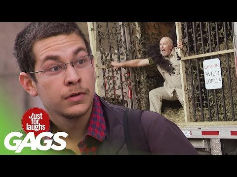 Animal Attack Pranks | Best of Just for Laughs Gags