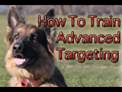 How To Train Your Dog: Advanced Targeting/Head Movement