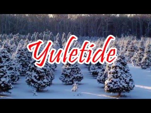 Yuletide Tree Farm - Quality Christmas Trees