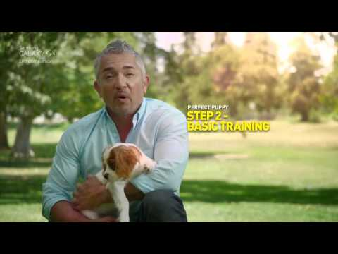 Cesar Millan doggy tips with GALAXY S4   Perfect puppy