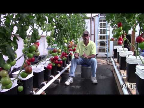 Greenhouse Pollination without Bees
