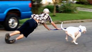 OLD DOG NEW FAILS | Dogs Failing Compilation
