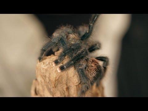 How Much Heat & Water a Tarantula Needs | Pet Tarantulas