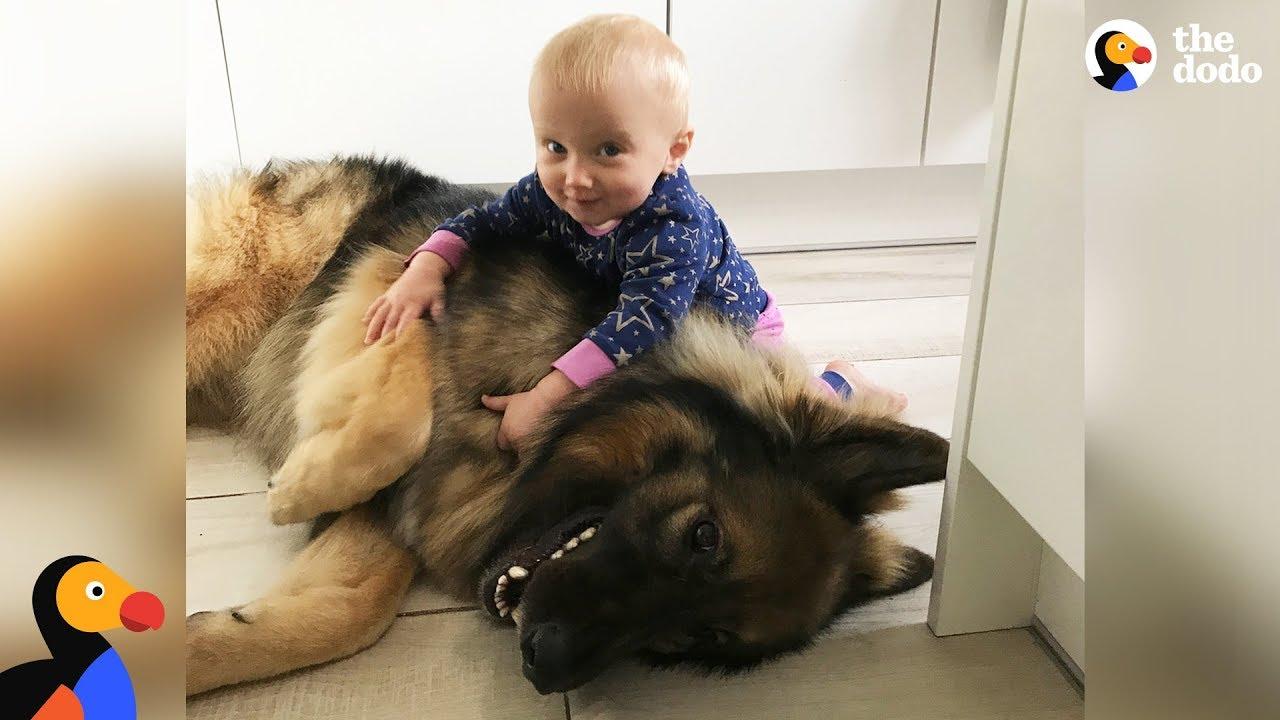 Big Dog Loves His Little Baby Girl   The Dodo