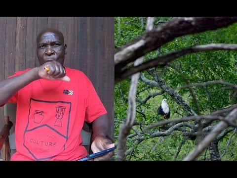 Local Bird Guide Mimics African Bird Calls - Amazing!