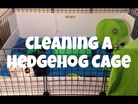 Cleaning a Hedgehog Cage (2014)