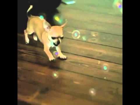 [ANIMAL VINE] Slow Motion Cuteness