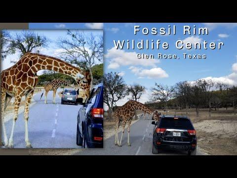 Travel: Fossil Rim Wildlife Center – Glen Rose, Texas